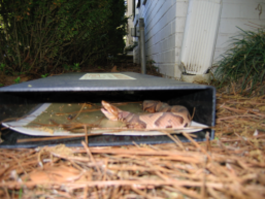 One of the biggest fears connected with snakes is that of poison, and Cahaba Snake Trap™ is here to help quell that fear. We do our part to educate our clientele on how to tell if a snake is poisonous . Our team is skilled in identifying snakes[link to Snake Identification] and their behaviors.